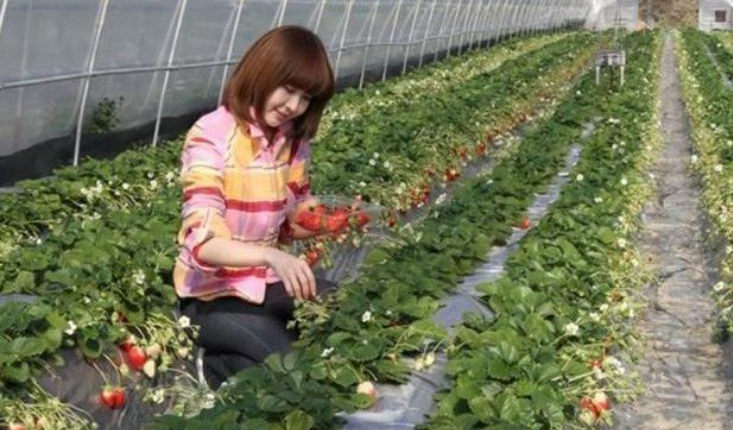 peta lokasi kebun strawberry ciwidey