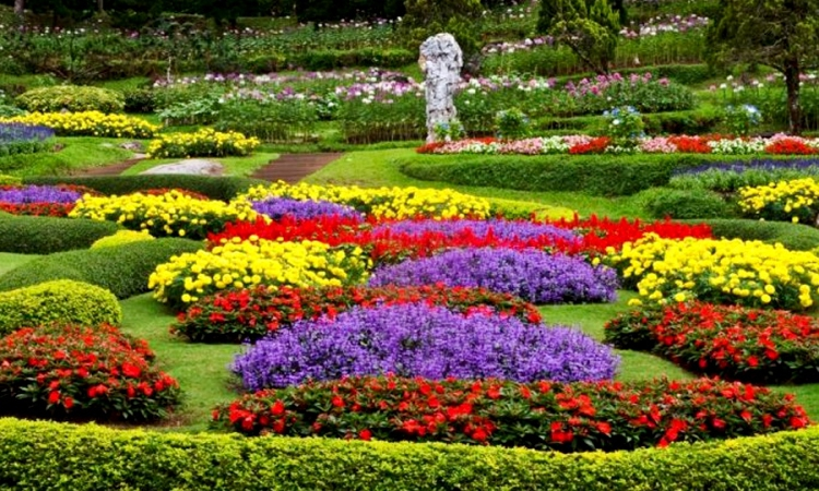 Kebun Bunga Cihideung Bandung