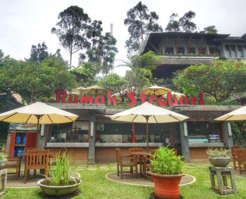 Rumah Strawberry Lembang Bandung