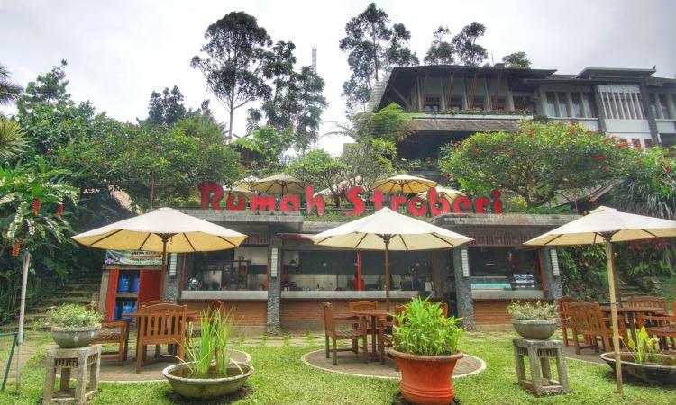 Rumah Strawberry Lembang Bandung Objek Wisata Unik Dan Menarik