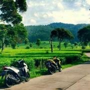 Jalan Perkebunan Teh Kartamanah
