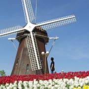 Kampung Tulip Bandung