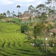 Lokasi Perkebunan Teh Malabar
