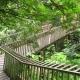 forest walk bandung