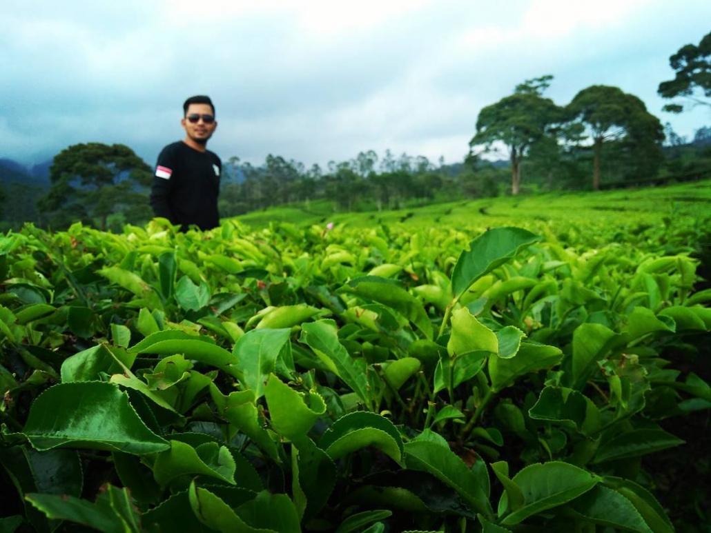 Tempat Wisata alam di Bandung Kebun Teh Sukawana @zaenalsatriani